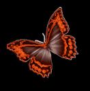 Papillon_Michounette.png