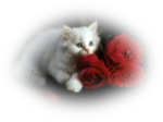 Misssilly-Kitten-Feb2008.png