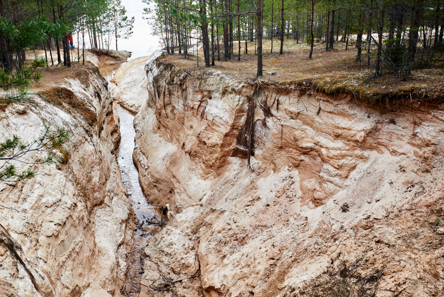 alexbelykh.ru, малый лужский каньон, каньон под Лугой, известковый каньон, каньон Ленобласть