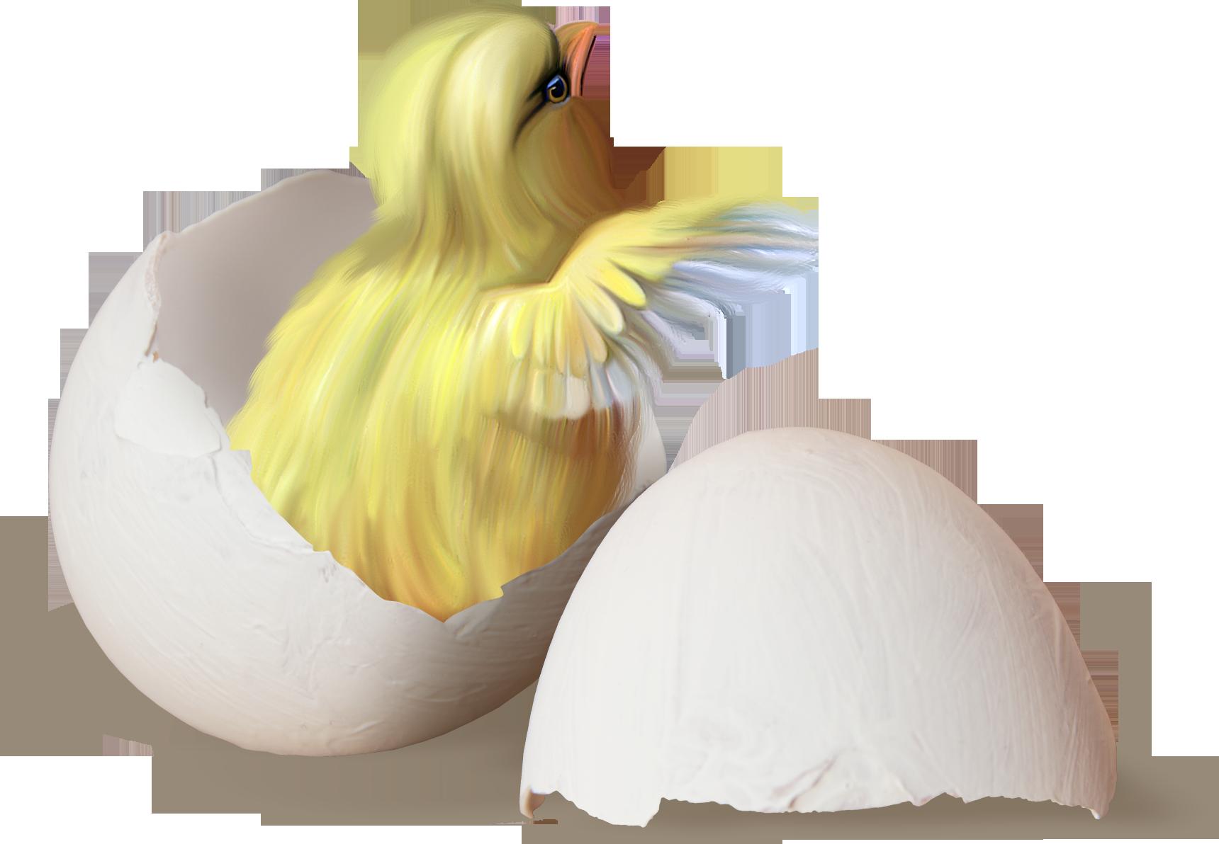 Картинки цыпленок и яйцо