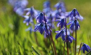 Весна синеокая