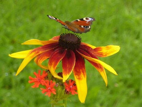 Душа – духовная частица  <br /> в духовном мире жить должна <br /> Как осознать себя душою <br /> и быть спокойною всегда?