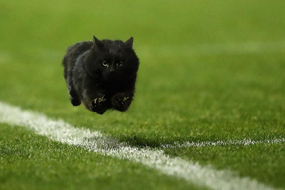 Черный кот выскочил на поле во время матча по регби и стал героем фотожаб (23 фото)