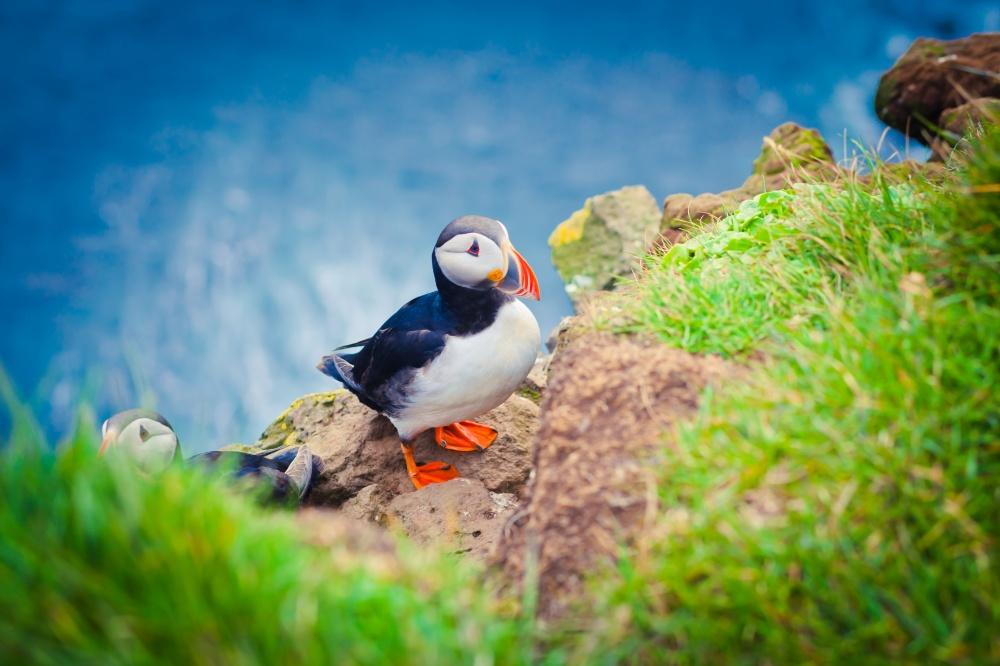 © Tsuguliev/Shutterstock  Исландцы обожают всевозможные заборы изаграждения.