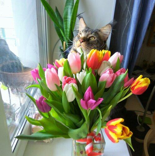 Тюльпаны и Гоша1.jpg
