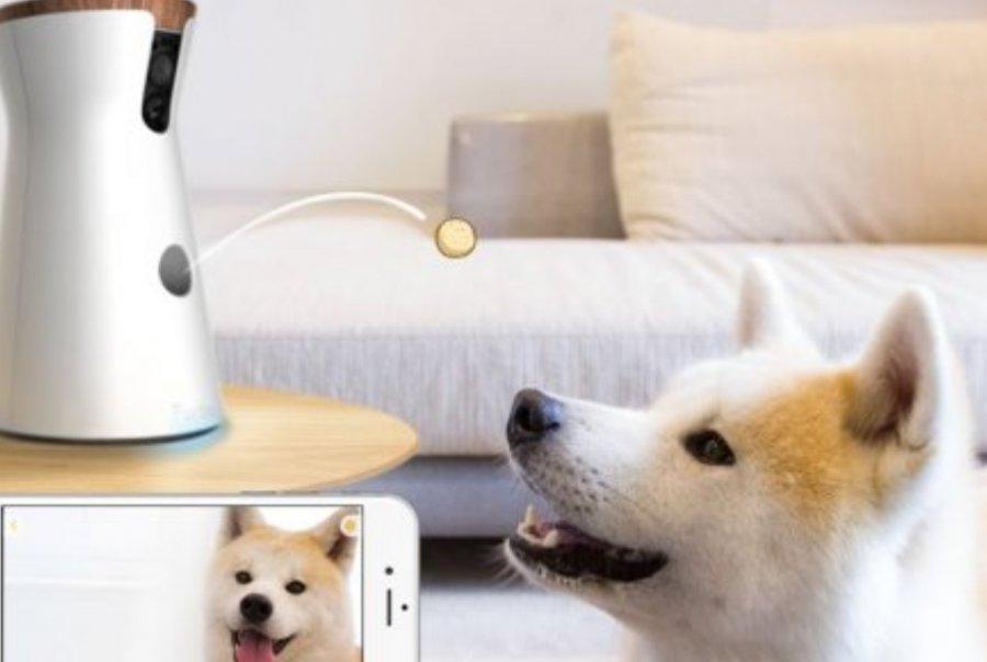 Хозяин сможет общаться ссобакой через смартфон