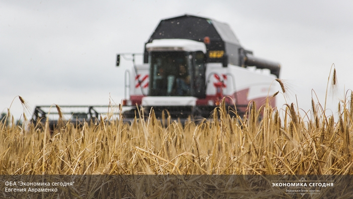 В РФ появился недостаток качественной пшеницы для хлеба