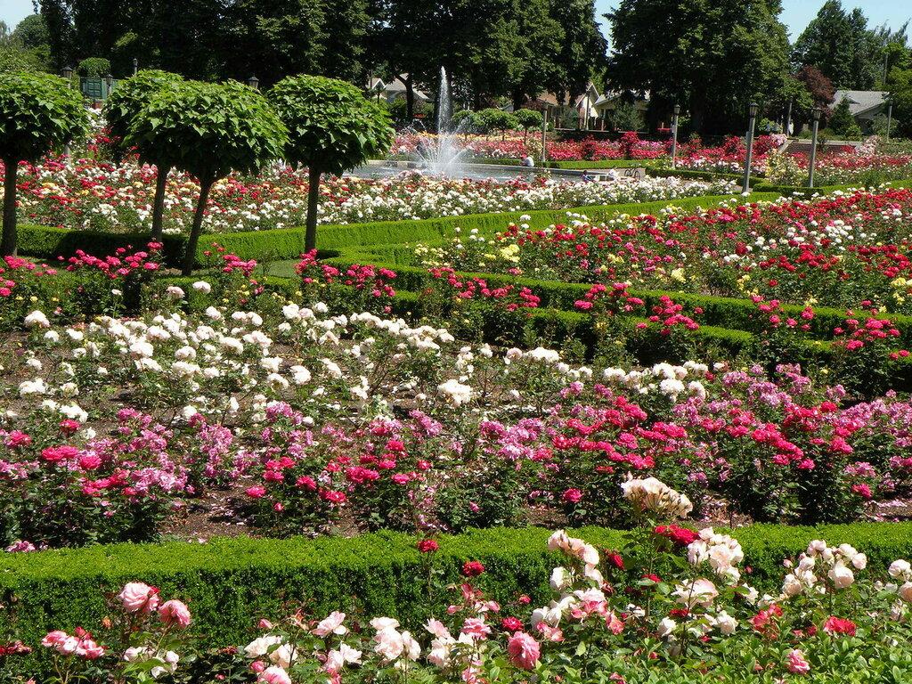 розовый сад фотографии очки необходимая вещь