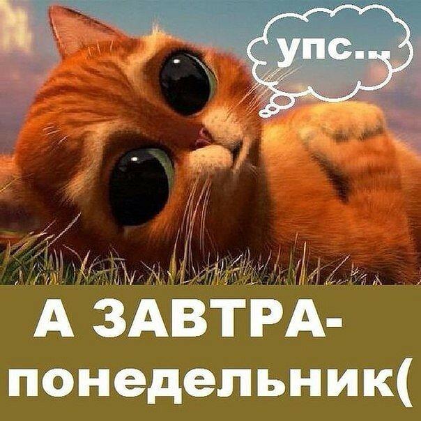 Картинки кошки, картинки гифки смешные завтра на работу