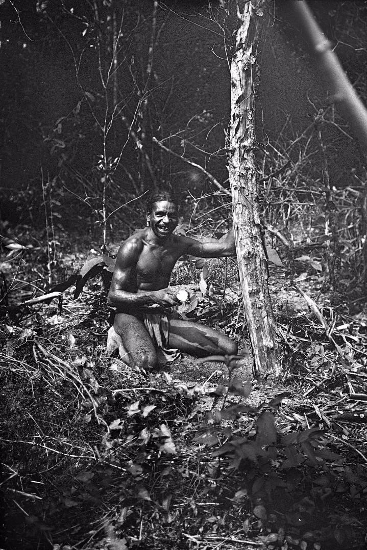 372. Лесной ведд выкапывает ямс