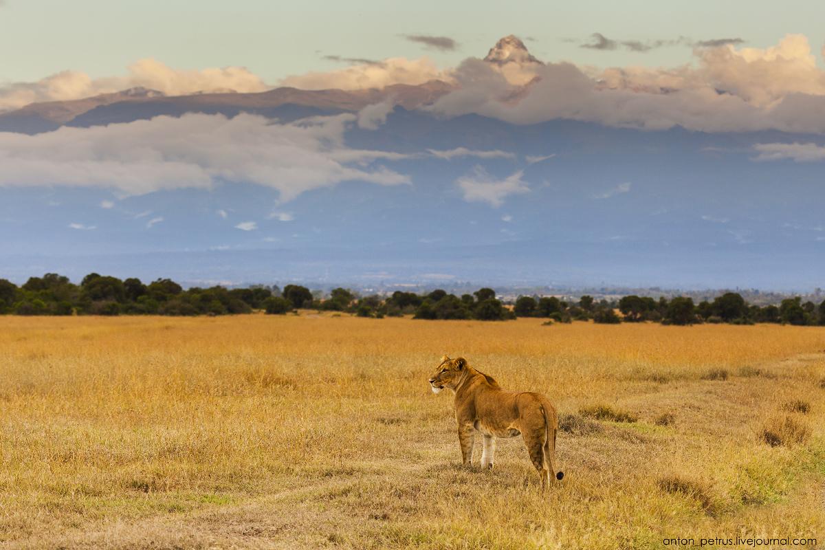 Оль Педжета, Кения