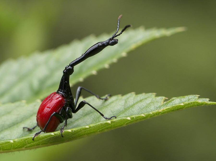 Животные с несоразмерными частями тела (11 фото)