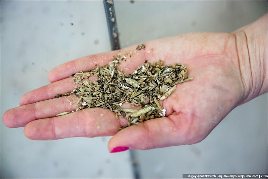 Дробилка превращает зерно в грубую муку. Это необходимо для дальнейшего разваривания зерна и высвобо
