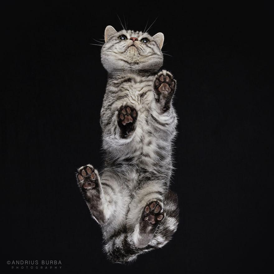 Мягкая и Пушистая Фотосессия: Под Котом