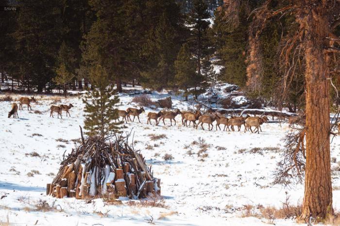Все олени посчитаны и имеют специальные маячки, для отслеживания перемещения стада.