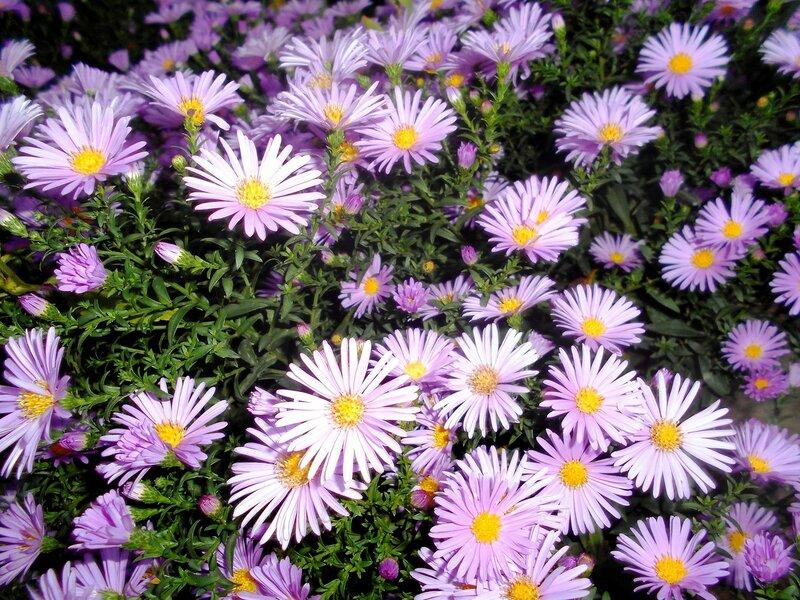 Цветы, в октябре ... DSCN9709.JPG