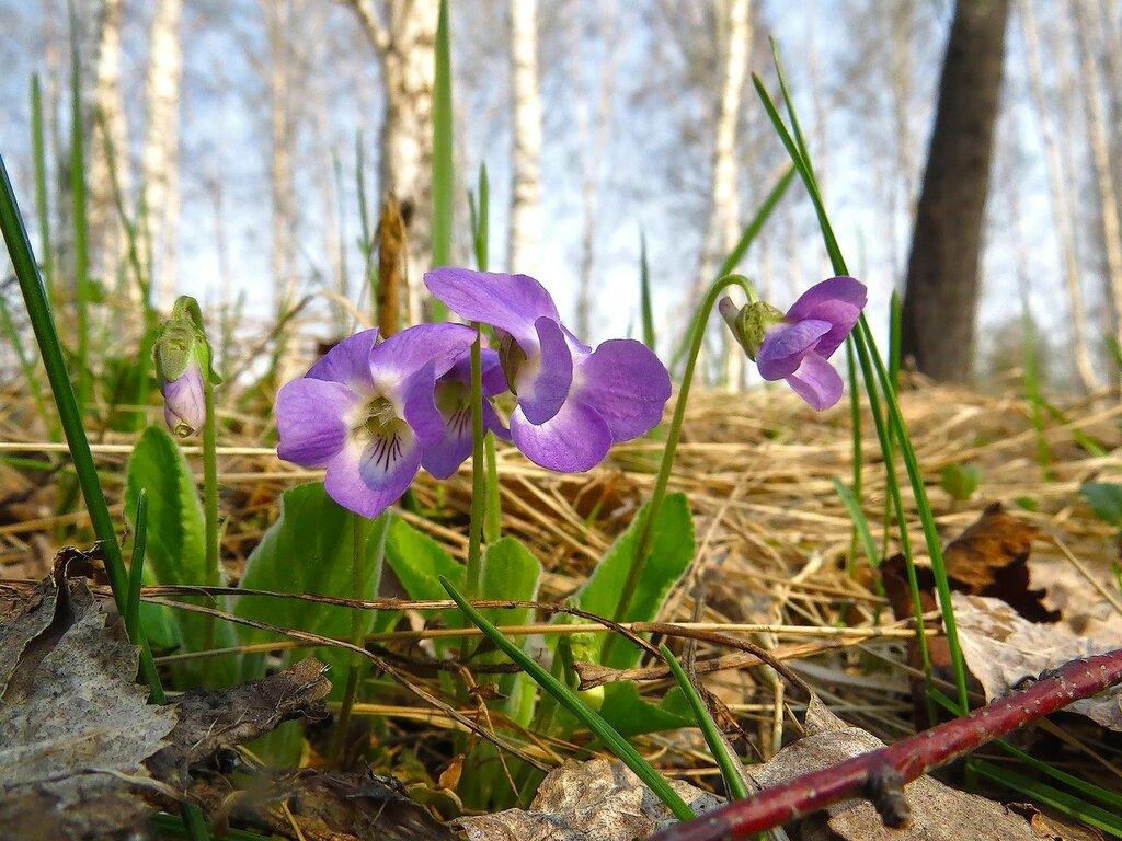 Цветы весны...
