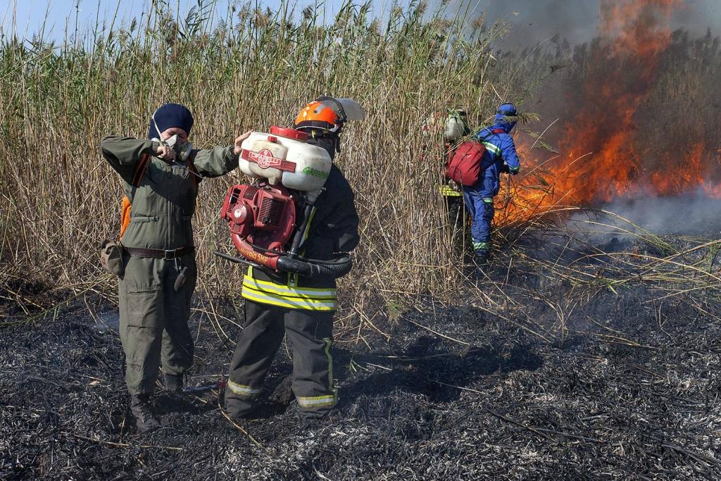 Казаки недали пожарным Гринпис тушить пожар наКубани эксклюзив