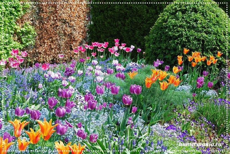 Сад Клода Моне в Живерни