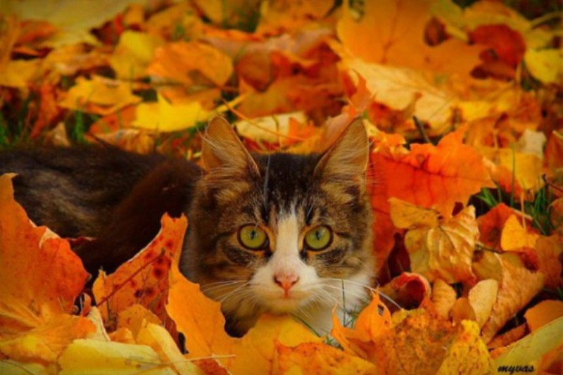 осень-кот-27.jpeg