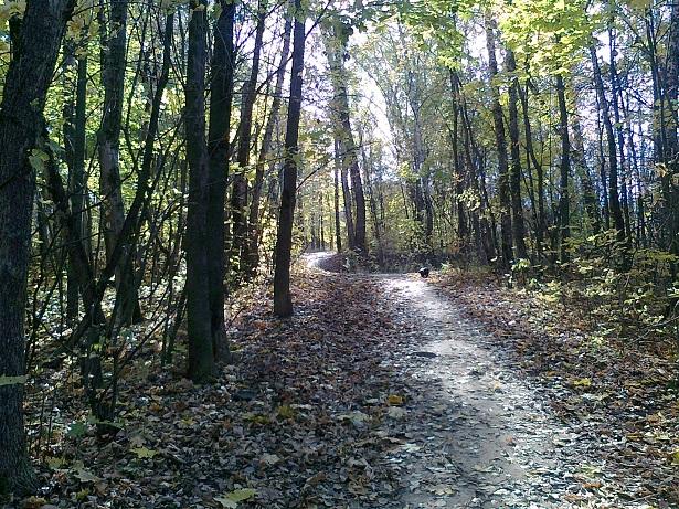 осень в лесу за усадьбой Ивановское