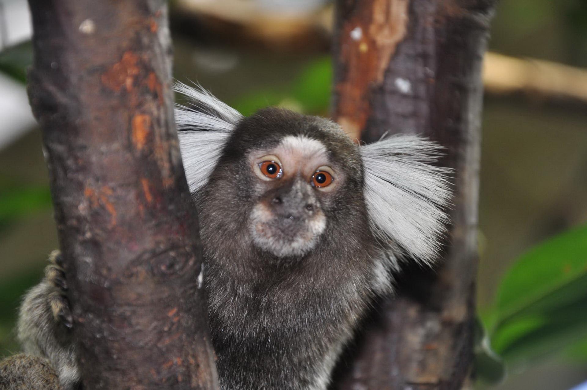 Шкідлива мавпочка