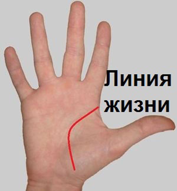 1. Если линия жизни длинная и глубокая, т.е. отчетливо видна на всем протяжении, то Вы стараете
