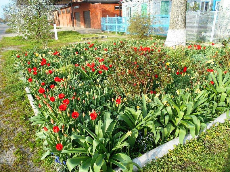 Весной, у цветов ... DSCN5023.JPG