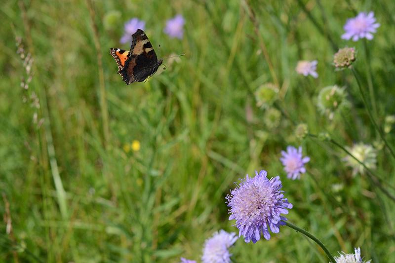 бабочки в полдень 3.jpg