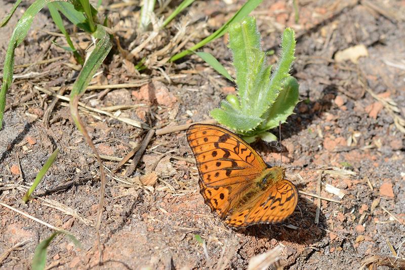 бабочки в полдень 5.jpg