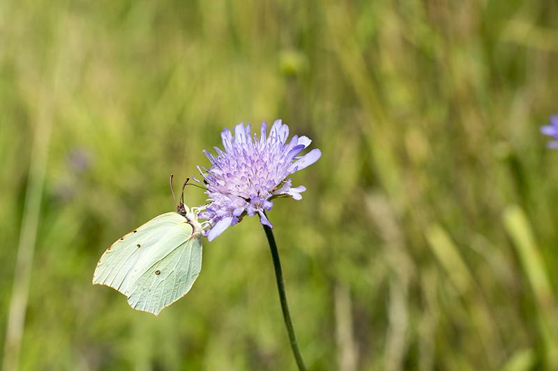 бабочки в полдень.jpg