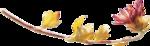 ldavi-fallingleavesautumntea-driedflower11.png