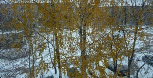 снег 2.jpg