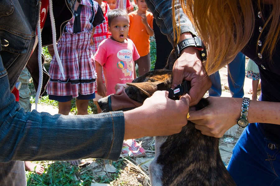2. Это стало для нее полноценной работой — в месяц волонтеры обрабатывают до 200 собак.