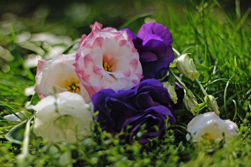 цветы-натюрморт.jpg