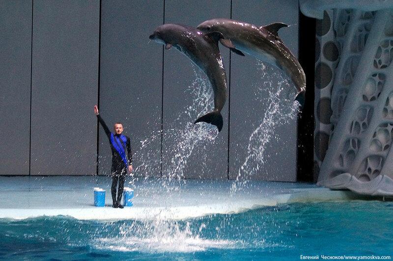 Лето. ВДНХ. Москвариум. Дельфин. 14.08.15.08..jpg