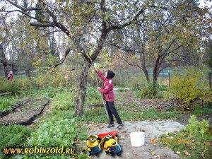 доразборка с яблоней