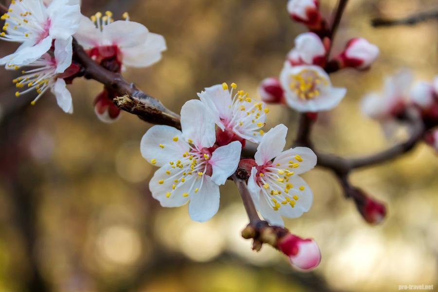 Цветение деревьев