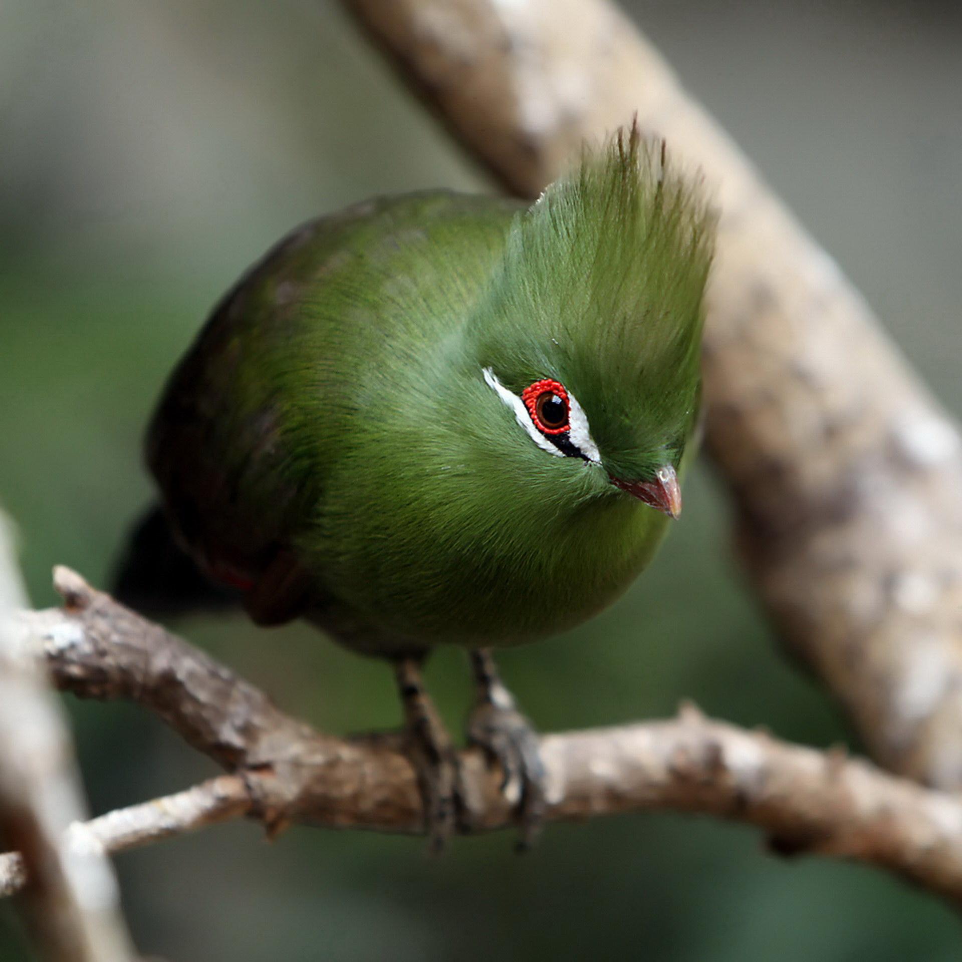 Яскрава пташка