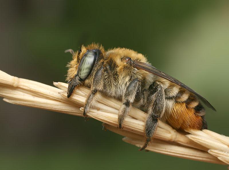 Как спят осы