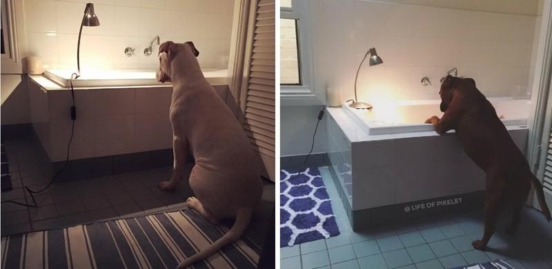 Как вы думаете, почему Пэтти и Пикелет теперь так интересуются ванной?