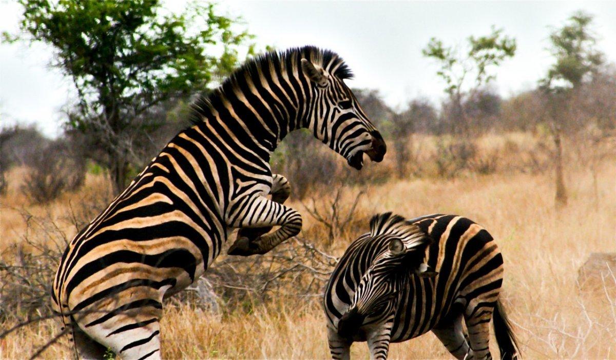 Хотя некоторые районы ЮАР небезопасны для путешествия в одиночку, национальный парк Крюгер не таков.