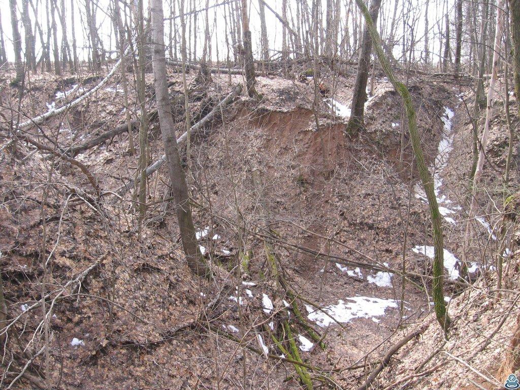 Овраг в лесу