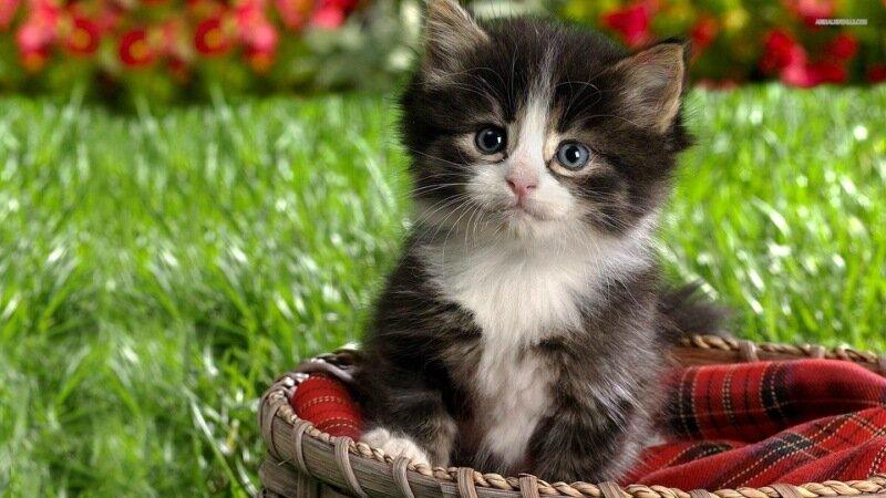 Happy-Kittens-HD-Wallpaper-12.jpg