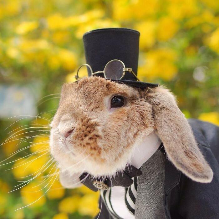 Кролик в образе Шерлока Холмса