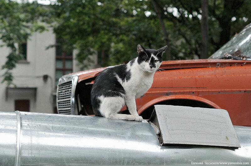 57. Средний Тишинский. кошка. 20.08.16.01..jpg
