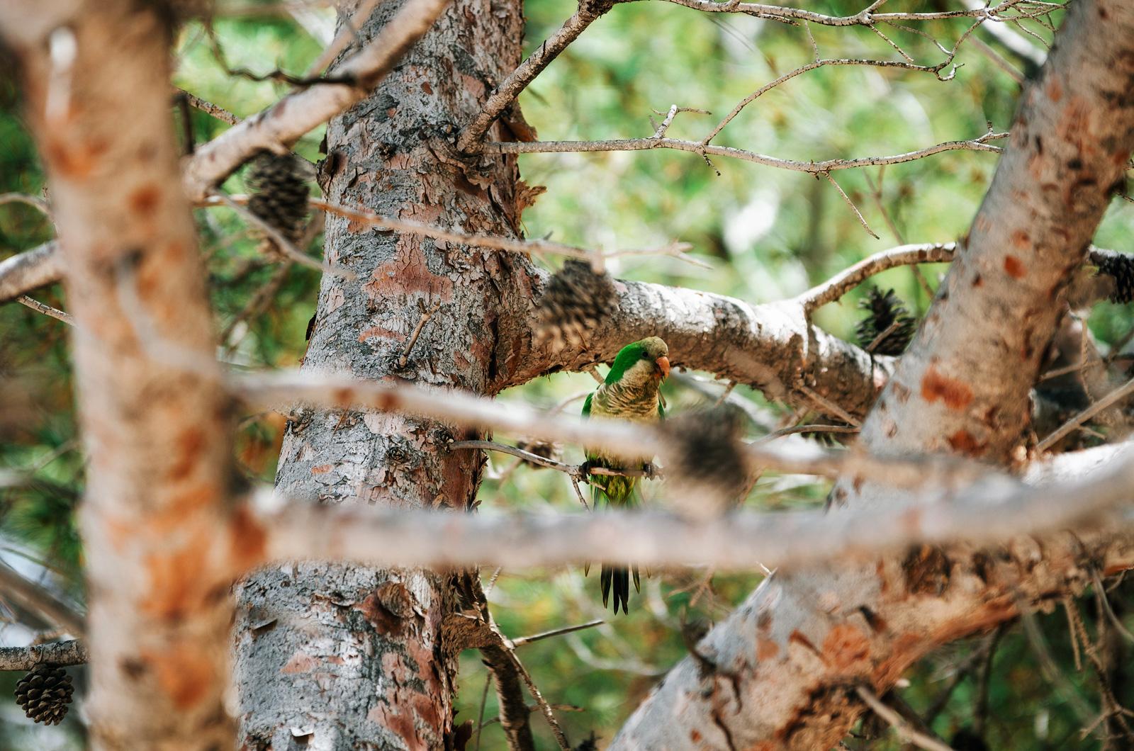 Попугай в парке Санта-Понсы