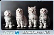 Windows 10 Домашняя v.1607 Rs1 by AglayA