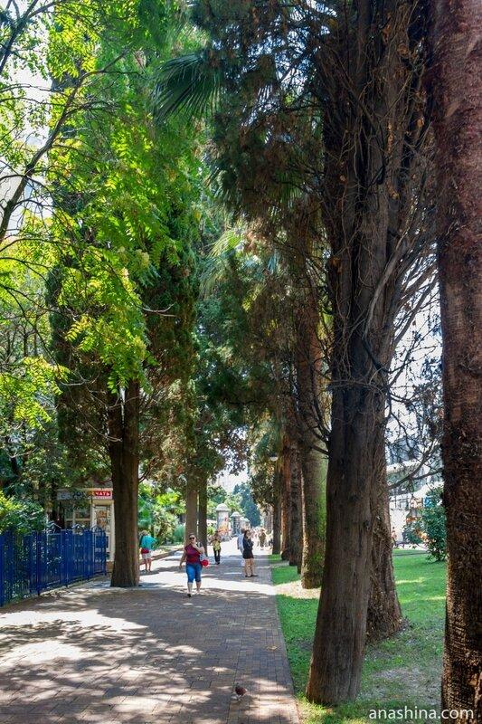 Кипарисовая аллея, Навагинская улица, Сочи