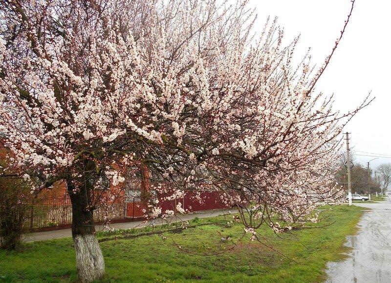 В цвете розовом ... DSCN4585.JPG